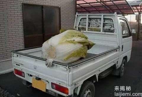 像岩石一样大的土豆 比三轮车还大的西瓜