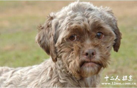 人面犬真实存在于美国,人面狗传言揭秘
