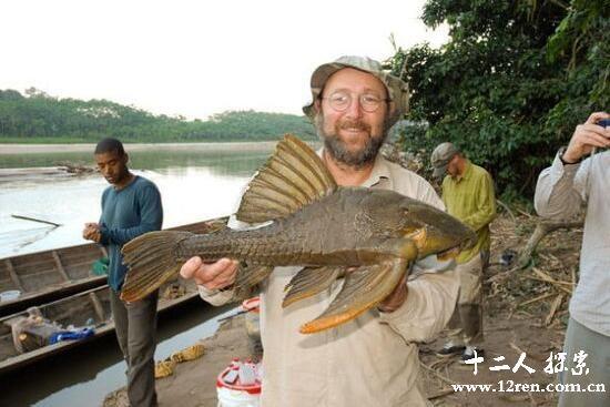 食木甲鲶鱼,吃木头长盔甲的鲶鱼(长80多里厘米)