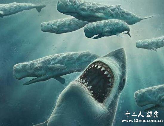 巨牙鲨,史前巨大鲨鱼(已经灭绝的噬人鲨鱼)