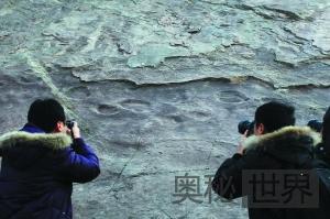 北京延庆县发现恐龙足迹化石