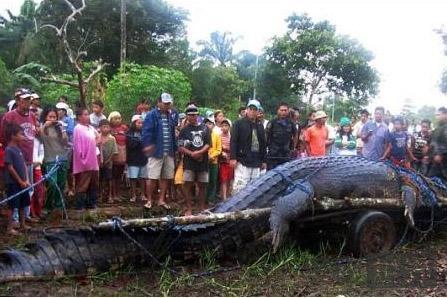 菲律宾捕获世界上最大的鳄鱼
