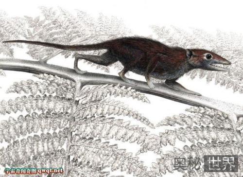 辽宁发现完整亚洲毛兽化石