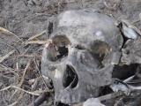 失踪9天男孩被找到只剩一副骨架