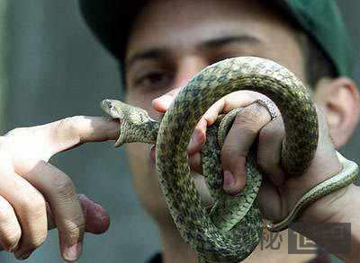 揭秘南亚神秘的蛇人部落