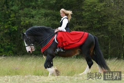 世界上最高的马:克莱兹代尔马