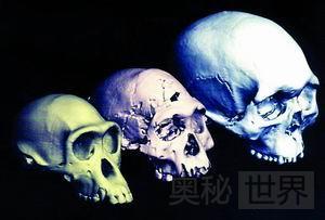 人类起源新理论:多地区进化说