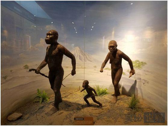 人类祖先粗壮型南猿是八字腿