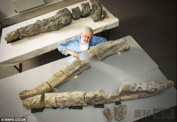 英国欲复原1.5亿年前海洋霸主上龙模型