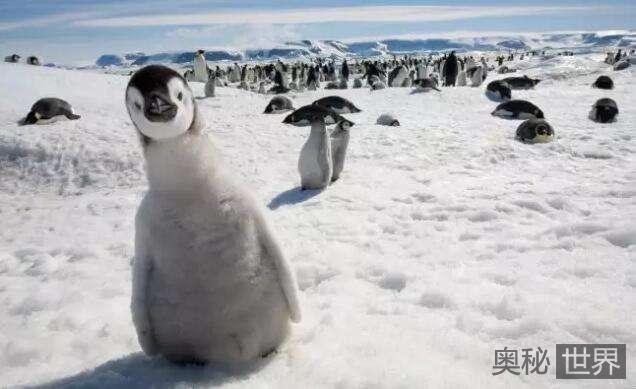 为什么北极只有北极熊没有企鹅,而南极却只有企鹅没有北极熊呢?