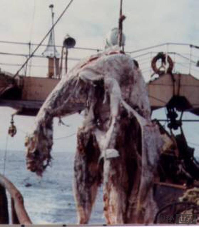 日本1977年海怪尸体事件