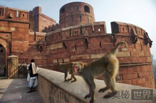 只有猴子敢管猴子