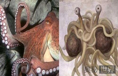 章鱼很像全能选手