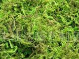 热带雨林中的绿毛怪物之谜