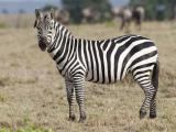 动物为何有互助精神
