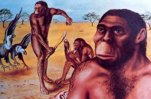 人类起源,人类祖先