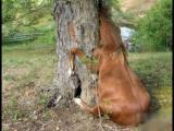 法国吃人樟树之谜