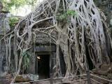 """马达加斯加的""""吃人树""""之谜"""