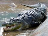 鳄鱼吃人事件:乌干达杀人鳄行凶20年,咬死了至少83名当地人