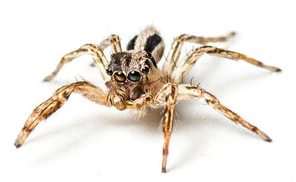 残忍的动物世界:雄性昆虫的反击