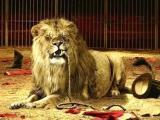 动物行刑:古罗马猛兽吃人刑