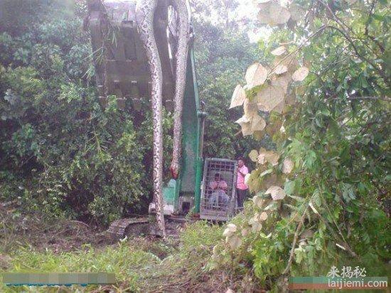 挖出16.7米长的140岁大蟒蛇精