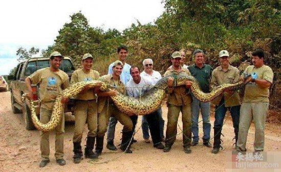 16.7米大蛇精